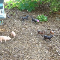 Drexel Hill Central Garden Railroad Pigs and Goats